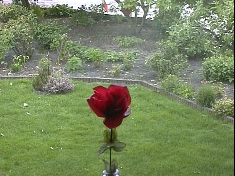 Op rode rozen vallen tranen.